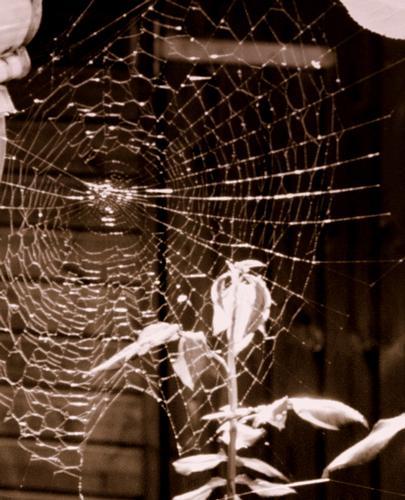 ..la tela del ragno.. - Marina di massa (1246 clic)