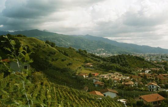 colline del candia - Massa (4329 clic)