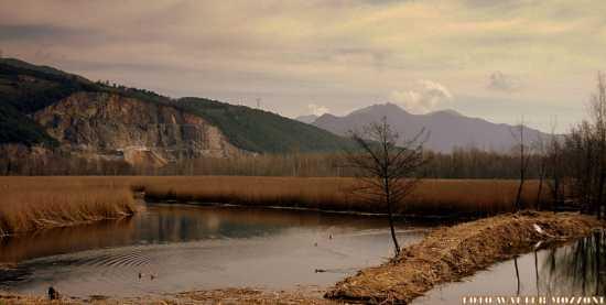 area protetta WWF lago di porta - Montignoso (3711 clic)