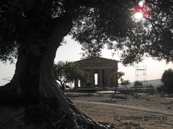 agrigento valle dei templi (1355 clic)