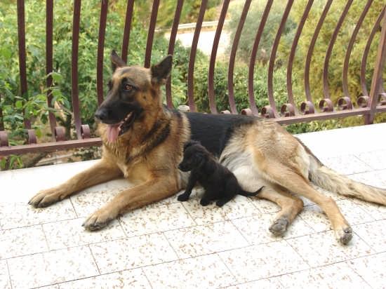 i miei cani - Monreale (2602 clic)