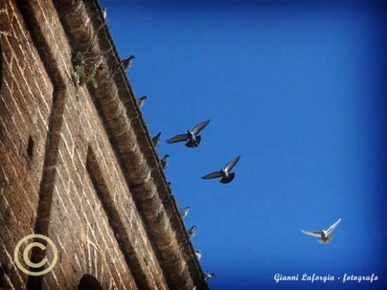 piccioni in volo con,,,spettatori  - Mesagne (2658 clic)