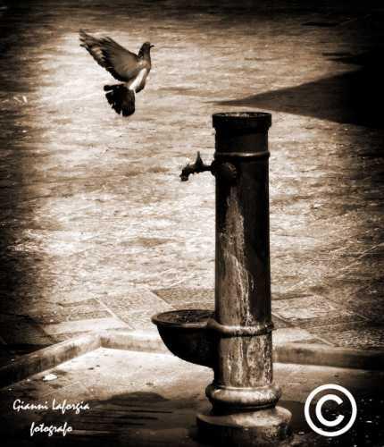 ... nel centro storico - Mesagne (2841 clic)