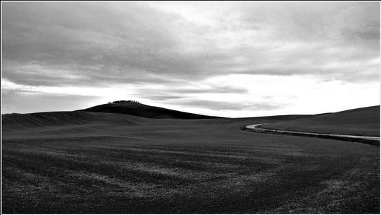 stormi di uccelli neri... - Montalcino (801 clic)