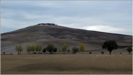 ...come esuli pensieri.. - Montalcino (834 clic)