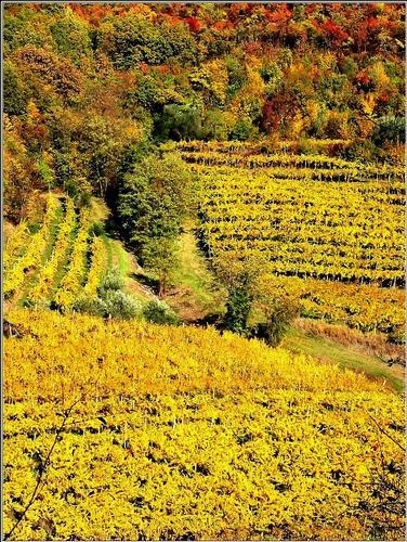 gialli..d'autore  - Villaga (539 clic)
