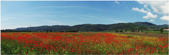 springtime.. - Villaga (668 clic)