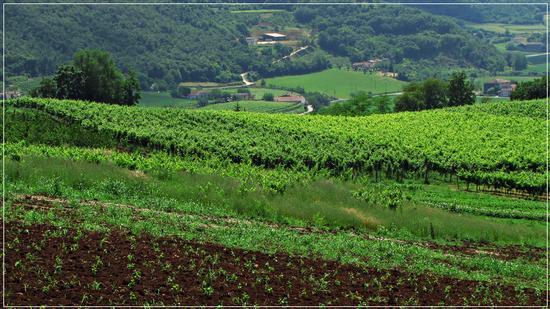 verdi.. - San germano dei berici (841 clic)
