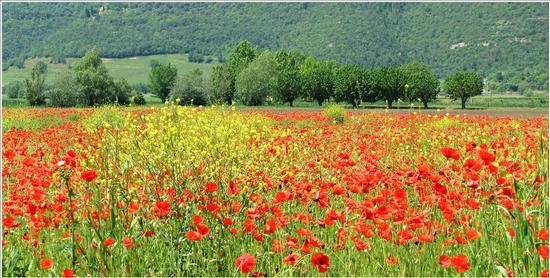 springtime - Villaga (903 clic)