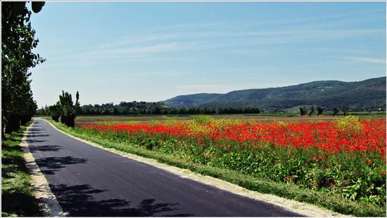 springtime - Villaga (690 clic)