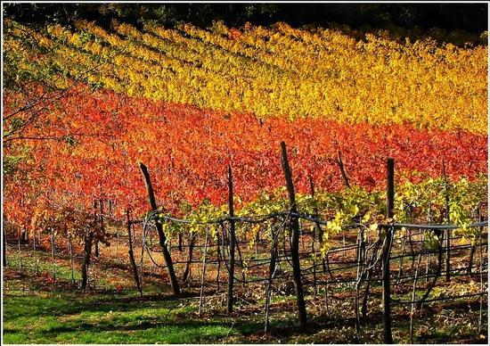 gialli ..rossi.. neri..verdi marrone  :autunno  - Lonigo (922 clic)