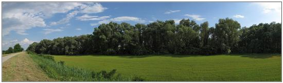 landscape  di maggio  - Legnago (1012 clic)