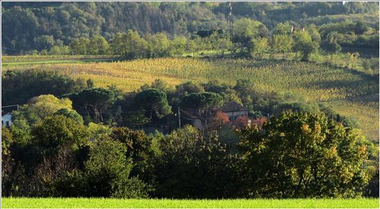 tracce d'autunno - Lonigo (814 clic)