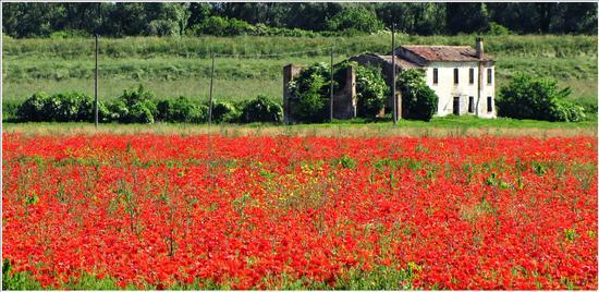 di un tempo.. - Villa bartolomea (759 clic)