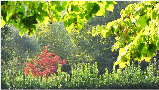 luce d'autunno.. - Borghetto (547 clic)