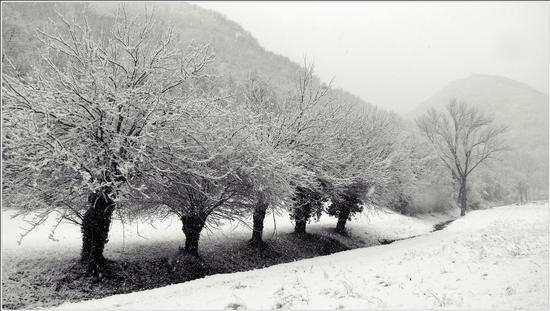 la valle .. si imbianca .. - Grancona (5160 clic)