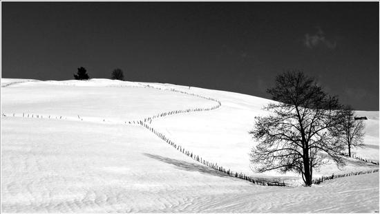 confini e legni  - Gallio (4656 clic)