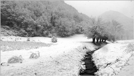 nevica.. - Grancona (868 clic)