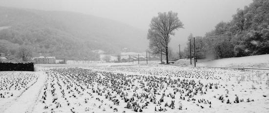 valle delle favole--- - Grancona (887 clic)