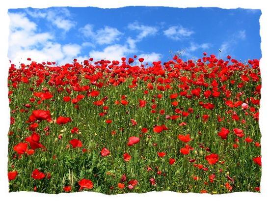 springtime - Lonigo - inserita il 05-May-15