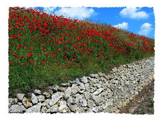 springtime - Lonigo (581 clic)