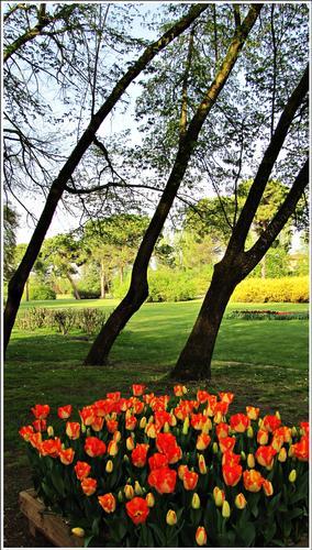 fioritura - Valeggio sul mincio (1813 clic)