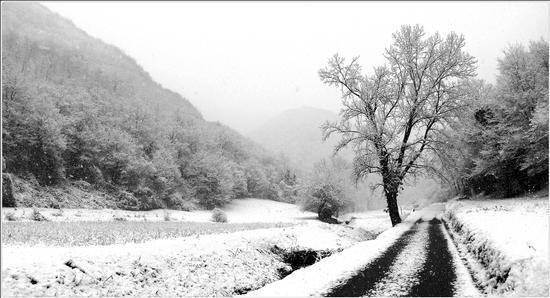 valle... - Grancona (878 clic)