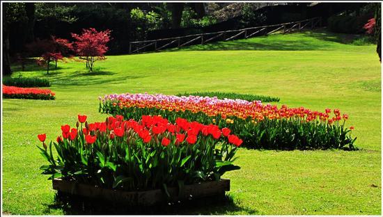fioritura  - Valeggio sul mincio (632 clic)