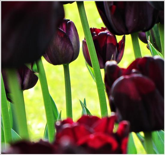 fioritura  - Valeggio sul mincio (694 clic)