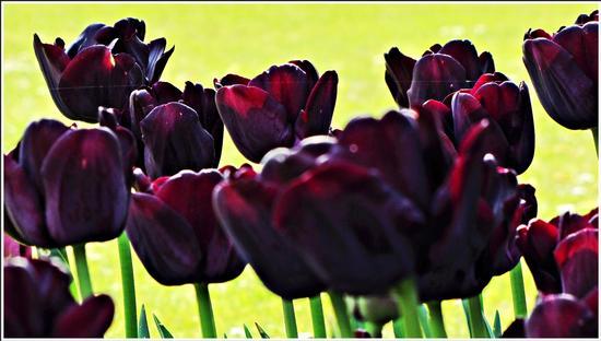 fioritura  - Valeggio sul mincio (782 clic)