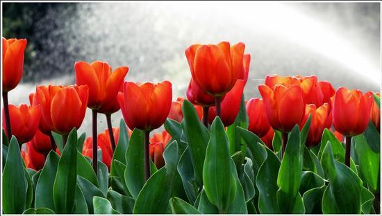 fioritura  - Valeggio sul mincio (656 clic)
