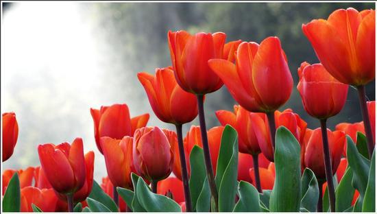 fioritura  - Valeggio sul mincio (872 clic)
