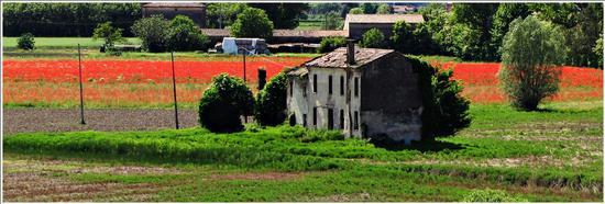 vita dietro l'abbandono.. - Villa bartolomea (653 clic)