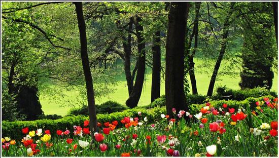 fioritura  - Valeggio sul mincio (563 clic)