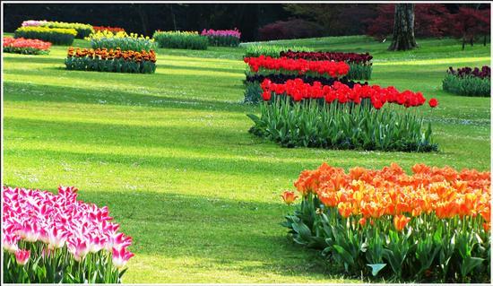 fioritura  - Valeggio sul mincio (737 clic)