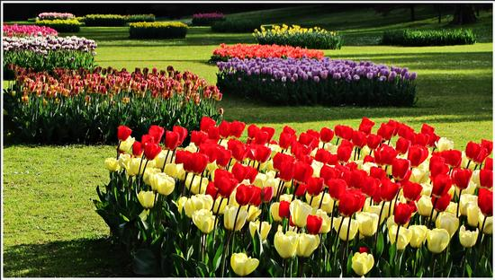 fioritura  - Valeggio sul mincio (677 clic)
