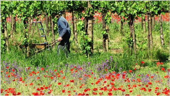 la bella estate ( Nuto) .. C,Pavese  - Cavarzere (700 clic)