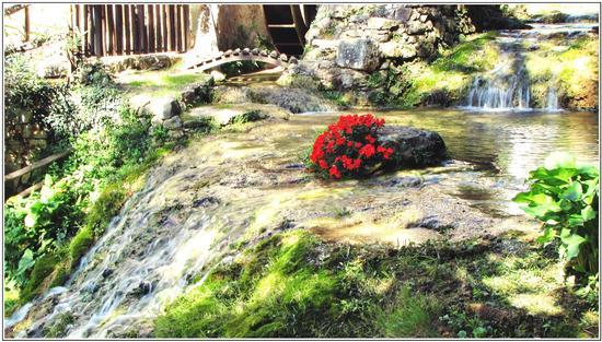 armonia a maggio  - Mossano (679 clic)
