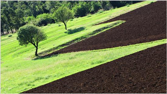 segementi e sghembi in  collina  - San germano dei berici (1330 clic)