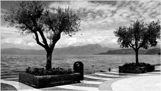 olivi  - Lazise (716 clic)