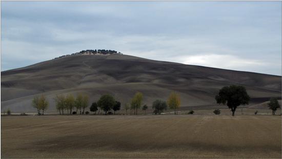 autunno  cupo - Montalcino (2249 clic)