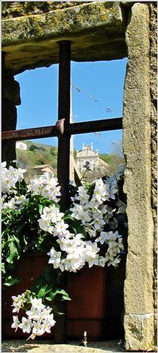 la finestra su l colle... - Mossano (1269 clic)