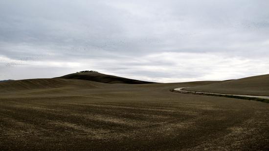 forme d'autunno grigio  - Montalcino (1048 clic)