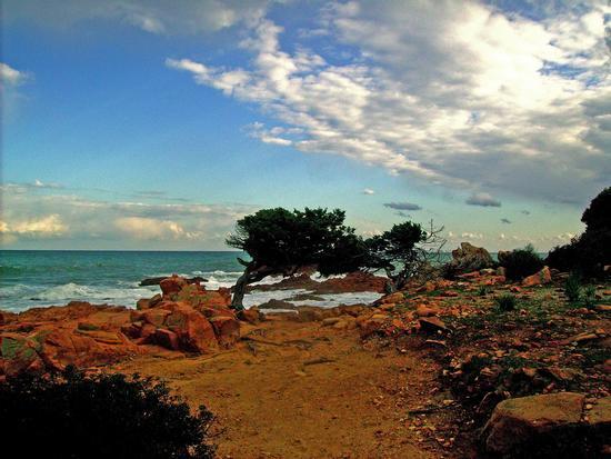 Un pomeriggio di febbraio - Marina di gairo (2080 clic)