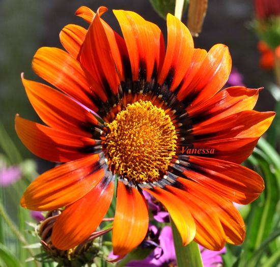 colori di primavera (797 clic)