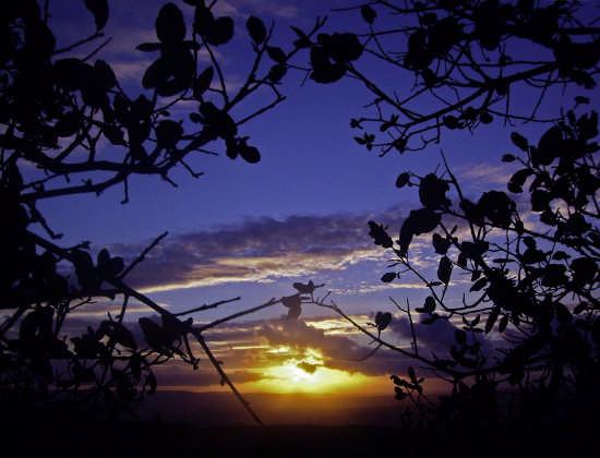 Dietro una tendina di foglie - Perdasdefogu (3208 clic)
