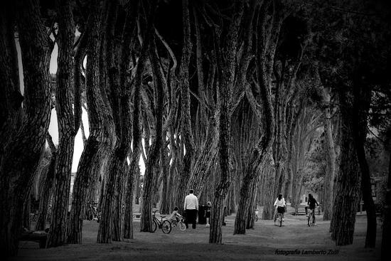 La pineta - Pineto (4694 clic)