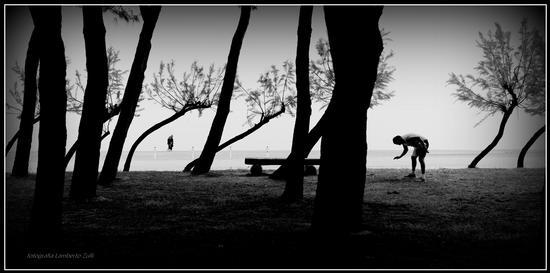 La pineta sul mare - Pineto (1021 clic)