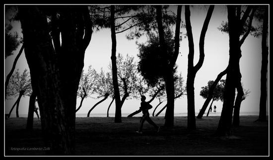 La pineta sul mare 2 - Pineto (1025 clic)