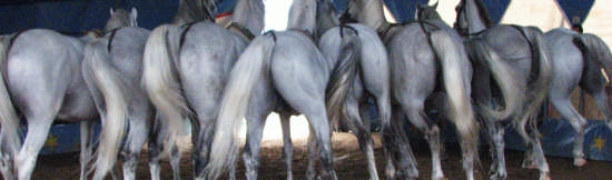 Cavalli - Chieti (2680 clic)